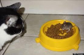 alimentazione casalinga gatto croccantini gatti cibo gatti