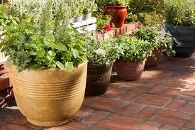 herbs your gateway to gardening bonnie plants