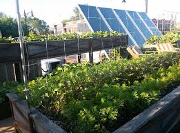 rooftop vegetable garden ideas and design layout homescorner com