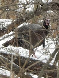 prairie outdoors nature newsbits