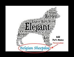 belgian sheepdog vs belgian shepherd 74 best groenendael images on pinterest belgian shepherd german