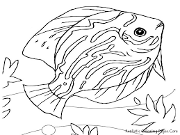 stylish idea cichlid animal coloring pages african