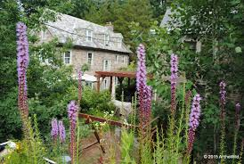 native plant plugs archewild native green roof research platform archewild