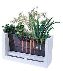 indoor veggie garden gardening ideas