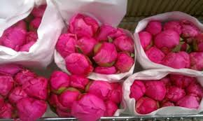 peonies wholesale milagrafloralimports the freshest wholesale flowers in the world