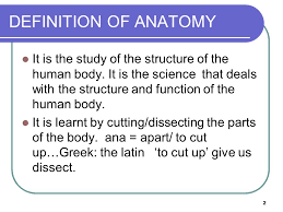 Human Anatomy Planes Of The Body Introduction To Anatomy U2013 Anatomical Terms Planes U0026 Movements