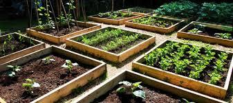welcome to veggie gardener online and home grown