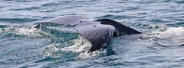 whales u0026 dolphins wildlife coast cruises