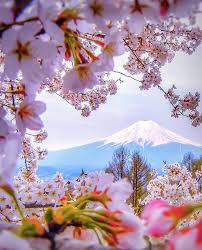 Flowers In Japanese Culture - best 25 fuji mountain ideas on pinterest mount fuji where is