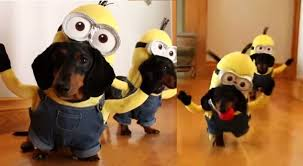 Halloween Costumes Dachshunds Minion Despicable Costume