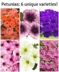 Plant Flower Garden - 75 best flower bed ideas images on pinterest flower gardening