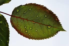 free stock photo of leaf leaves macro