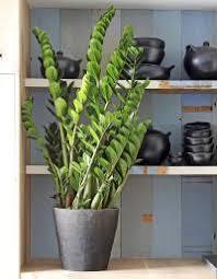 air sec dans une chambre quelle plante verte pour quelle pièce de la maison femmes d