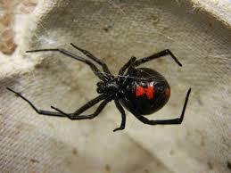 spider treatment va md dc 800 457 3785 triple s services inc