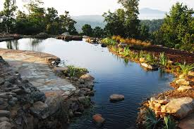 Natural Swimming Pool Natural Swimming Pools Becoming More Popular In The Us