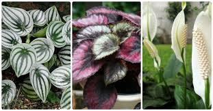 low light flowering house plants interior design