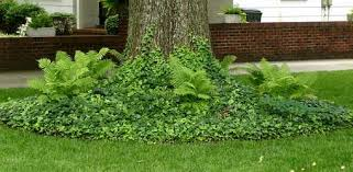 how to landscape your yard with deer resistant plants today s