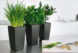 eye catching photos of indoor live plants great wrought iron