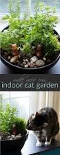 melbourne u2013 kidding around australia best 25 small indoor plants ideas on pinterest indoor green