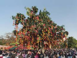 wishing tree lam tsuen wishing tree attractions in po hong kong