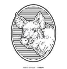 pig head butcher shop in stock photos u0026 pig head butcher shop in