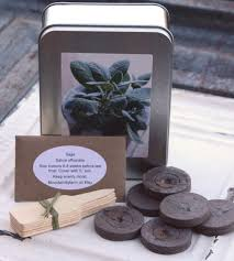 sage seed kit indoor herb garden kit organic sage seeds garden