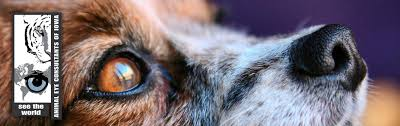Temporary Blindness In Dogs Canine Diseases