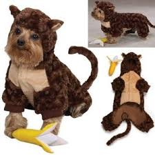 Small Dog Halloween Costumes Ideas 162 Dogs Images Dog Treat Recipes