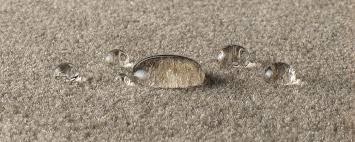 Caring For Wool Rugs Carpet Care Jacaranda Floorcoverings Rugs And Broadloom Carpets