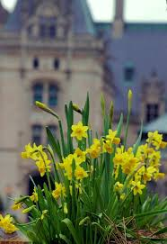 Spring Colors 17 Best Images About A Spring Like No Other On Pinterest Craft