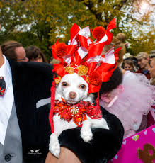 anthony rubio at the 25th annual tompkins square halloween dog