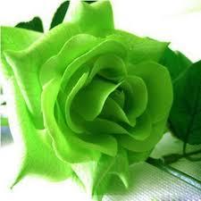 green roses unpopular but beautiful green roses book happy
