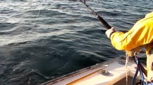 cape cod bay november tuna fishing youtube