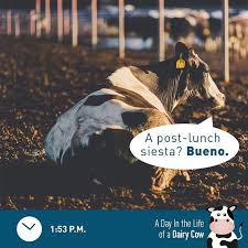 20 best arizona dairy families images on arizona
