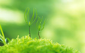 green plants green plants wallpaper 22804