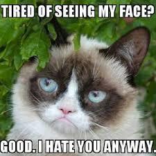 252 best miss grumpy cat images on pinterest grumpy cat funny
