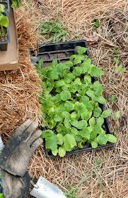 Make Your Own Cucumber Trellis Homemade Cucumber Trellis Blogging With Apples