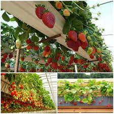 How To Build Vertical Garden - vibrant vertical garden pyramid planter guide and instructions