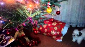 funny puppy kill christmas tree youtube