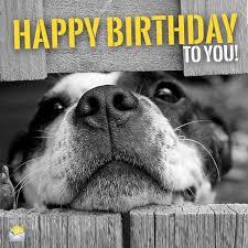 Birthday Dog Meme - birthday dog quotes luxury best 25 happy birthday dog meme ideas