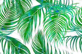 tropical palm leaves pattern patterns creative market