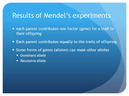 mendelian genetics how are traits passed from parents to offspring