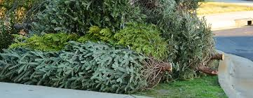 live christmas trees recycling center to accept live christmas trees garland starting