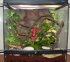 post pictures of your exo terra terrariums please talk to the frog