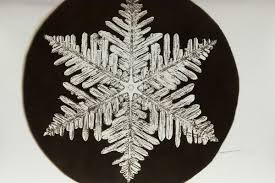 snowflake bentley the pioneering snowflake photographs of a young obsessive new
