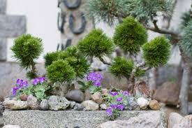 Steingarten Mit Granit Steingarten Gestalten U2013 Tipps Für Das Eigene Steinbeet Garten