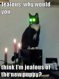 Laser Meme - lolcats laser eyes lol at funny cat memes funny cat pictures