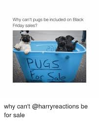 black friday puppy sale 25 best memes about pugs pugs memes