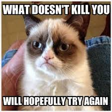 Meme Angry - 32 funny angry cat memes for any occasion freemake