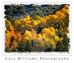 fall color gary williams photography